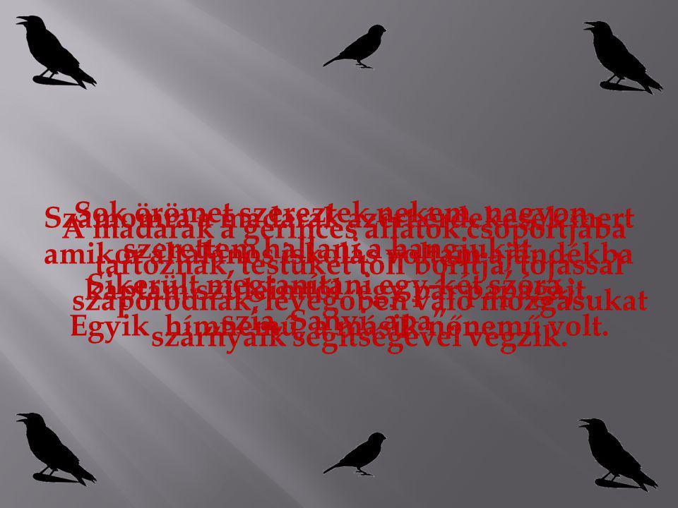 ERDEI FÜLESBAGOLY Életmódja Szaporodása Előfordulása Ragadozó madár.