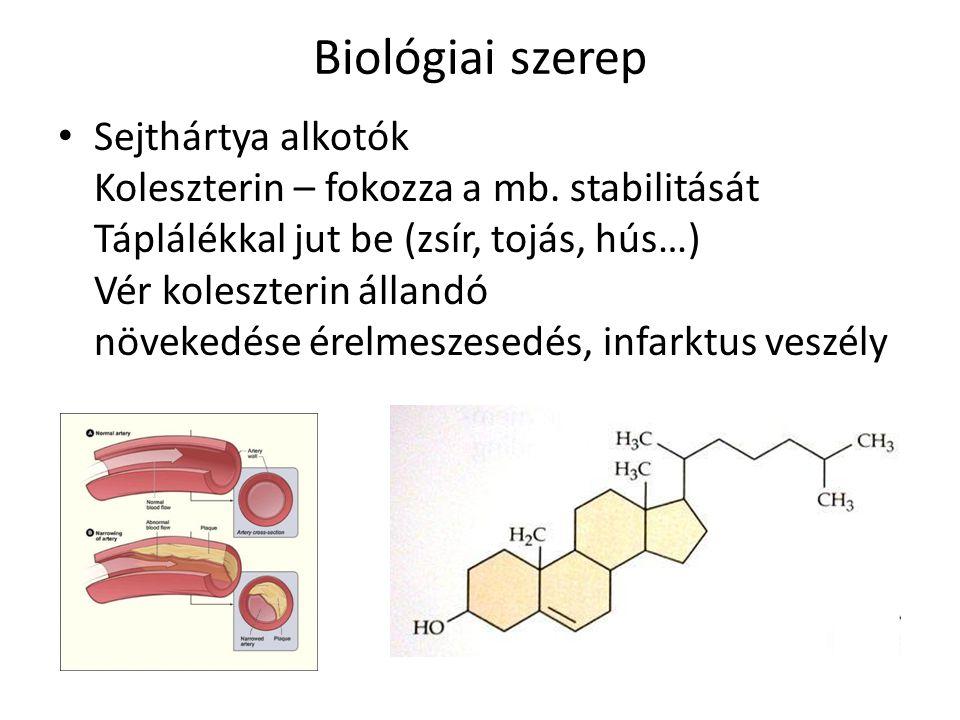 Biológiai szerep Sejthártya alkotók Koleszterin – fokozza a mb.