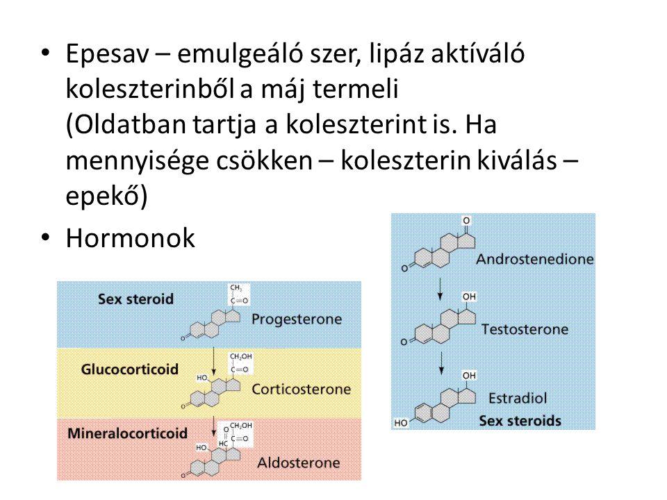 Epesav – emulgeáló szer, lipáz aktíváló koleszterinből a máj termeli (Oldatban tartja a koleszterint is.