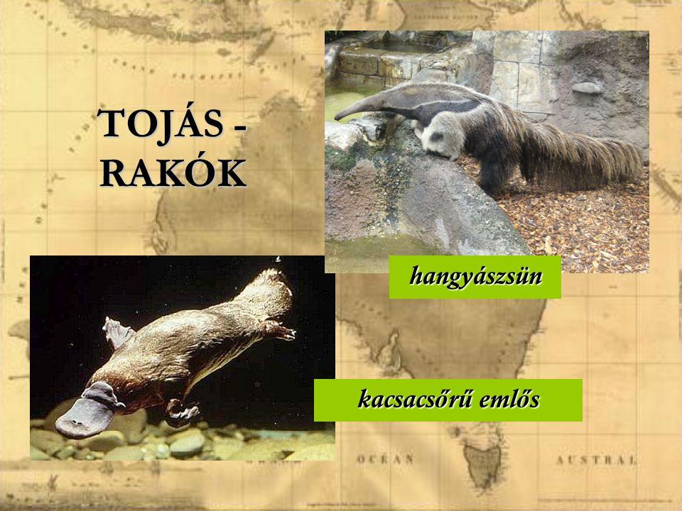 kazuár emu MADARAK HULLÁMOS PAPAGÁJ