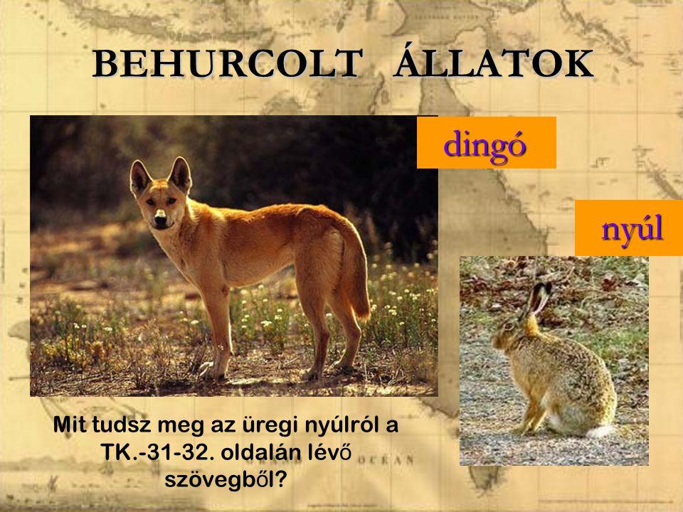BEHURCOLT ÁLLATOK dingó dingó nyúl nyúl Mit tudsz meg az üregi nyúlról a TK.-31-32. oldalán lév ő szövegb ő l?