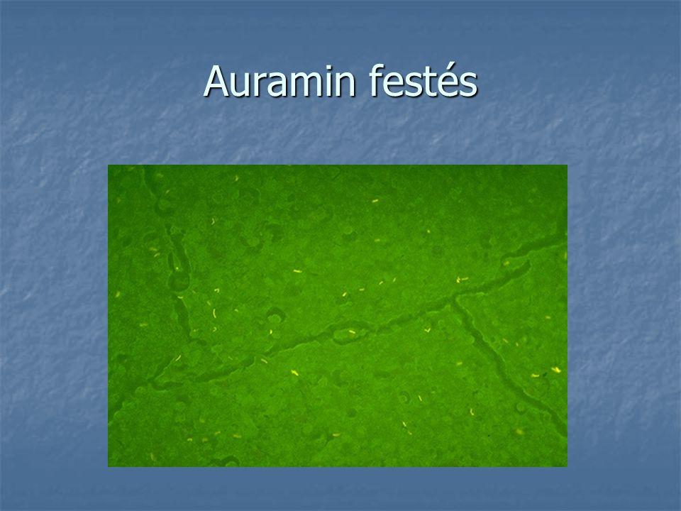 Auramin festés