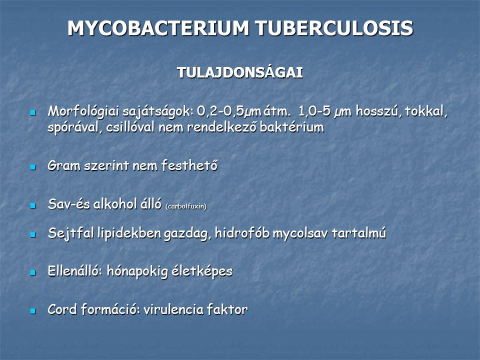 MYCOBACTERIUM TUBERCULOSIS TULAJDONS Á GAI Morfológiai sajátságok: 0,2-0,5µm átm. 1,0-5 µm hosszú, tokkal, spórával, csillóval nem rendelkező baktériu