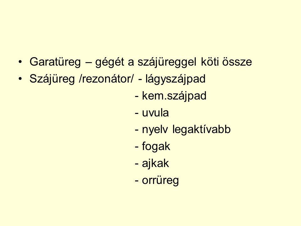 Garatüreg – gégét a szájüreggel köti össze Szájüreg /rezonátor/ - lágyszájpad - kem.szájpad - uvula - nyelv legaktívabb - fogak - ajkak - orrüreg