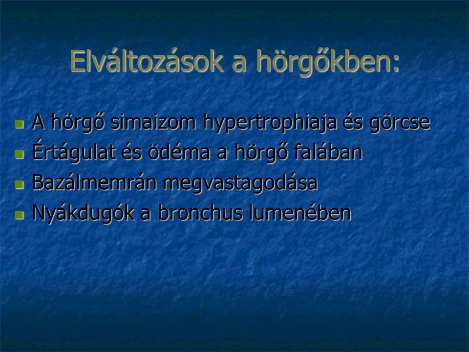 Elváltozások a hörgőkben: A hörgő simaizom hypertrophiaja és görcse A hörgő simaizom hypertrophiaja és görcse Értágulat és ödéma a hörgő falában Értág