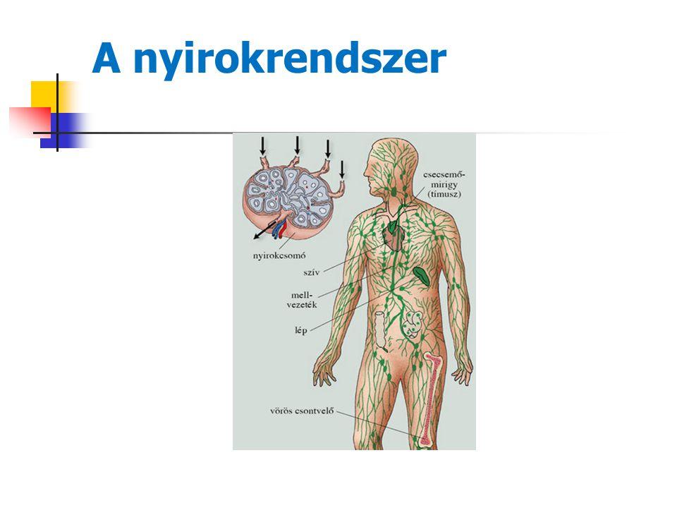 """15 Tünetek  Tünetmentes beteg nyirokcsomó megnagyobbodást észlel  """"Szűrő vizsgálat (mellkas rtg)  Panaszok  általános tünetek (láz,izzadás, bőrviszketés)  """"lokalizáció okozta panaszok (pl:köhögés, mellkasi fájdalom)  Immunrendszer működés zavara (I mmunhiányos állapot – fertőzéshajlam)"""