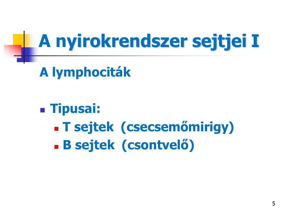 5 yirokrendszer sejtjei I A nyirokrendszer sejtjei I A lymphociták Tipusai: T sejtek (csecsemőmirigy) B sejtek (csontvelő)