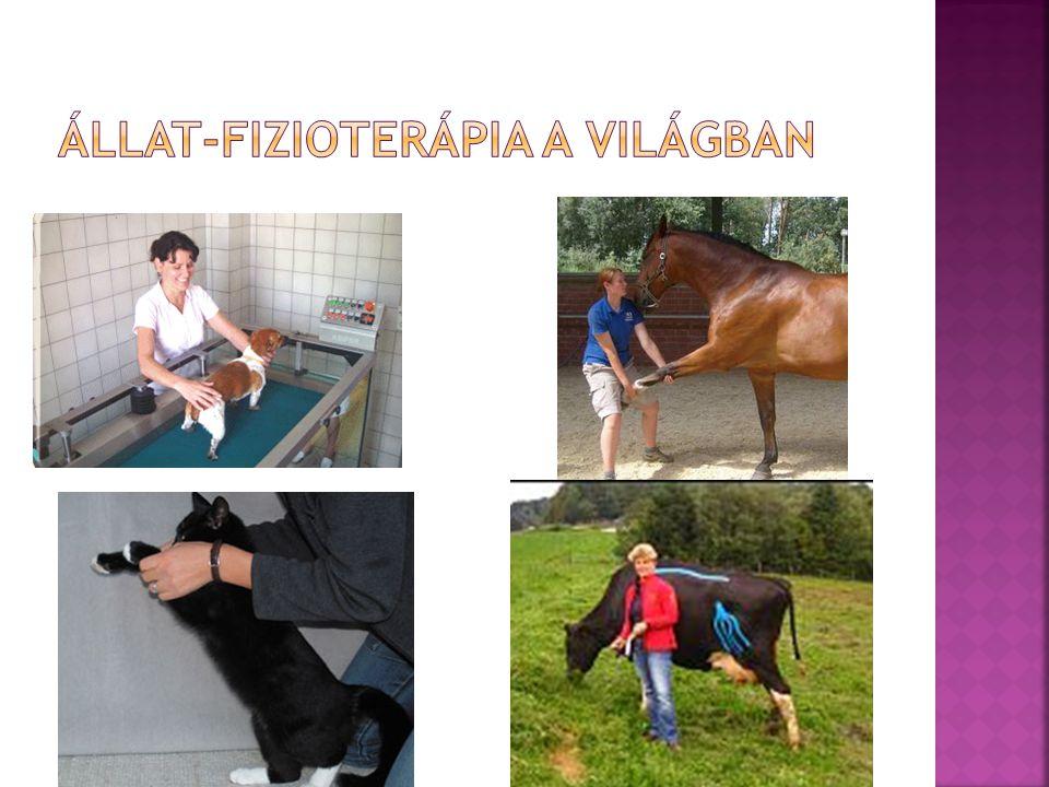  Állatorvosi diagnózis alapján önállóan dolgozik  Állapotfelmérést készít  Terápiás tervet dolgoz ki  Felügyeli és végrehajtja a terápiát  Szorosan együttműködik a kezelő állatorvossal