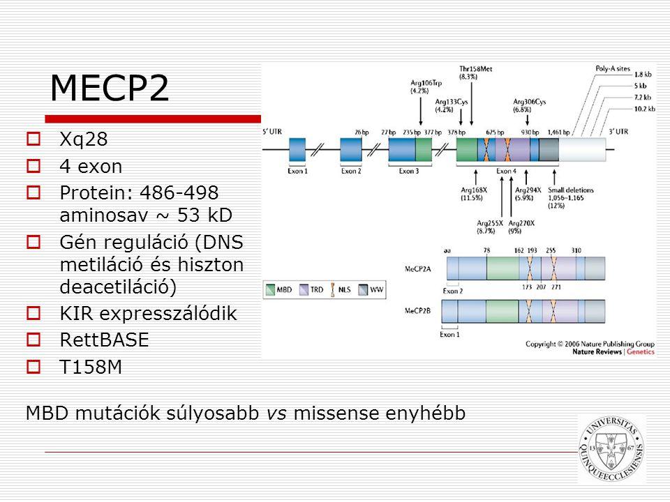 MECP2  Xq28  4 exon  Protein: 486-498 aminosav ~ 53 kD  Gén reguláció (DNS metiláció és hiszton deacetiláció)  KIR expresszálódik  RettBASE  T158M MBD mutációk súlyosabb vs missense enyhébb