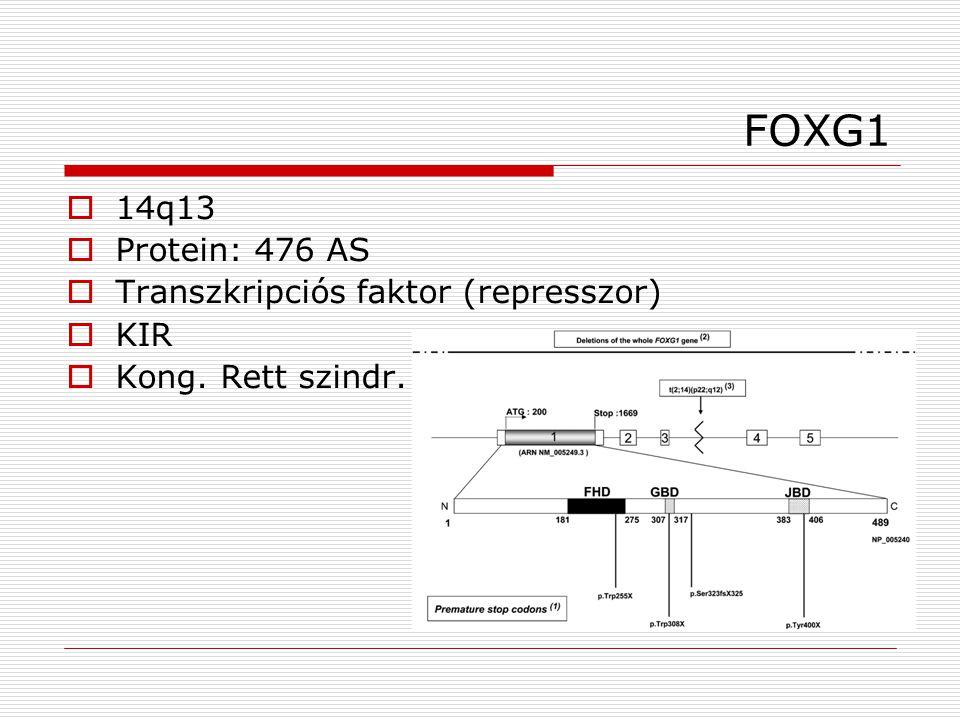 FOXG1  14q13  Protein: 476 AS  Transzkripciós faktor (represszor)  KIR  Kong. Rett szindr.