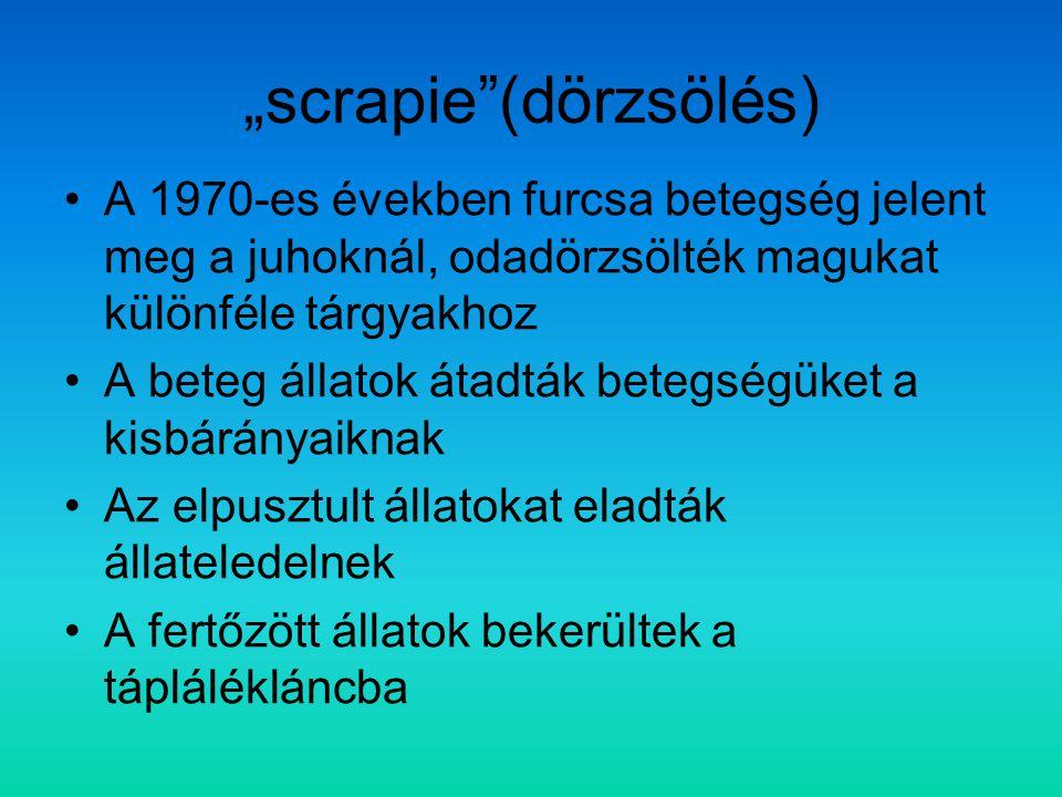 """""""scrapie""""(dörzsölés) A 1970-es években furcsa betegség jelent meg a juhoknál, odadörzsölték magukat különféle tárgyakhoz A beteg állatok átadták beteg"""