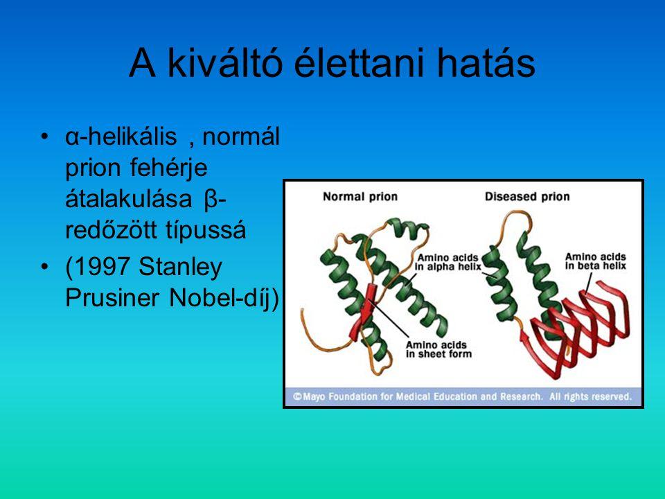 A kiváltó élettani hatás α-helikális, normál prion fehérje átalakulása β- redőzött típussá (1997 Stanley Prusiner Nobel-díj)