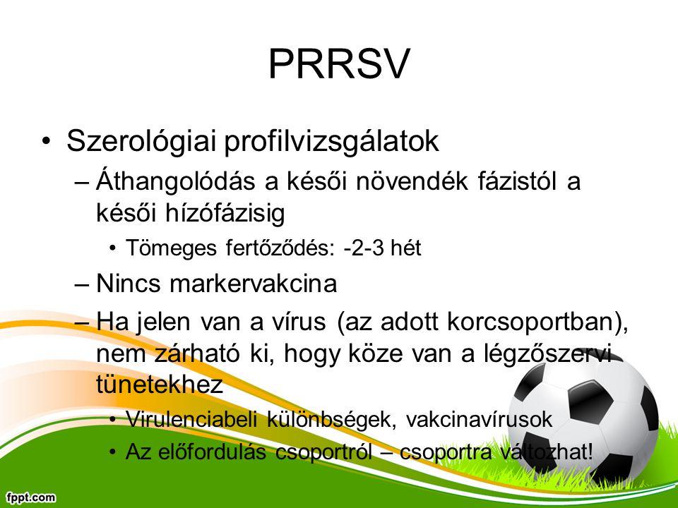PRRSV Szerológiai profilvizsgálatok –Áthangolódás a késői növendék fázistól a késői hízófázisig Tömeges fertőződés: -2-3 hét –Nincs markervakcina –Ha jelen van a vírus (az adott korcsoportban), nem zárható ki, hogy köze van a légzőszervi tünetekhez Virulenciabeli különbségek, vakcinavírusok Az előfordulás csoportról – csoportra változhat!