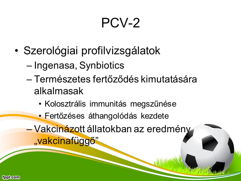 """PCV-2 Szerológiai profilvizsgálatok –Ingenasa, Synbiotics –Természetes fertőződés kimutatására alkalmasak Kolosztrális immunitás megszűnése Fertőzéses áthangolódás kezdete –Vakcinázott állatokban az eredmény """"vakcinafüggő"""