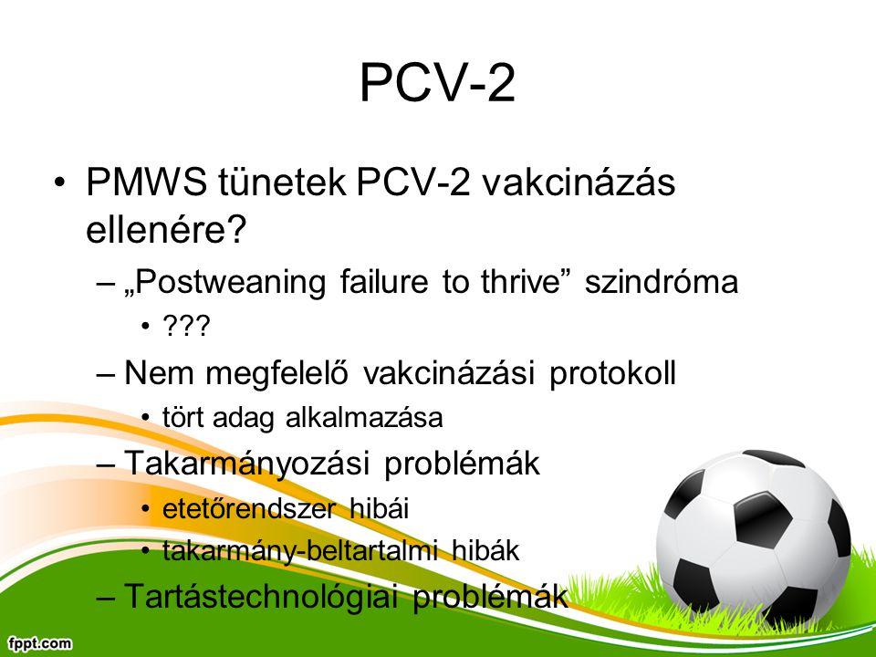 """PCV-2 PMWS tünetek PCV-2 vakcinázás ellenére? –""""Postweaning failure to thrive"""" szindróma ??? –Nem megfelelő vakcinázási protokoll tört adag alkalmazás"""