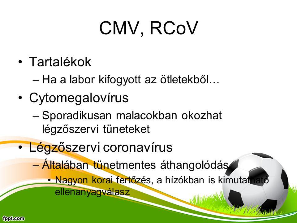 CMV, RCoV Tartalékok –Ha a labor kifogyott az ötletekből… Cytomegalovírus –Sporadikusan malacokban okozhat légzőszervi tüneteket Légzőszervi coronavír
