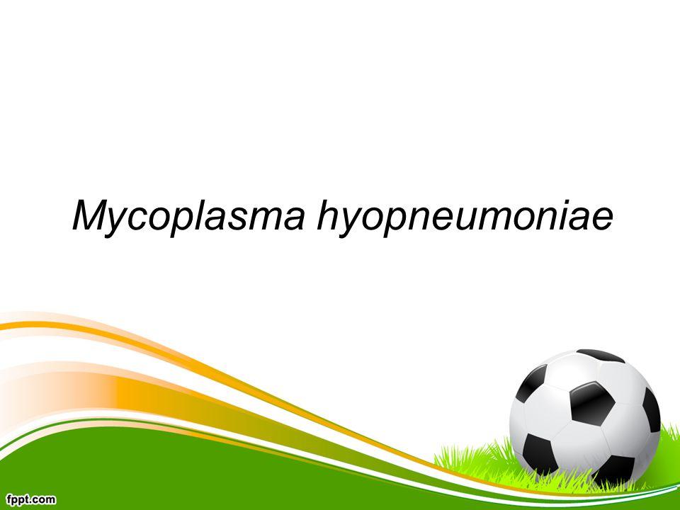 Mycoplasma hyopneumoniae