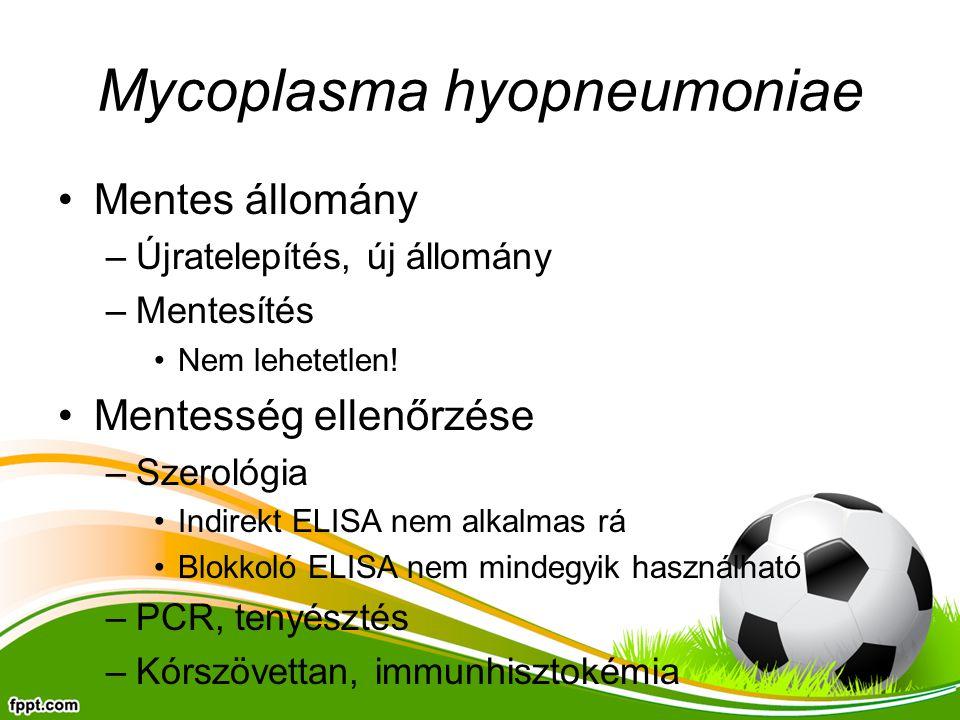 Mycoplasma hyopneumoniae Mentes állomány –Újratelepítés, új állomány –Mentesítés Nem lehetetlen! Mentesség ellenőrzése –Szerológia Indirekt ELISA nem