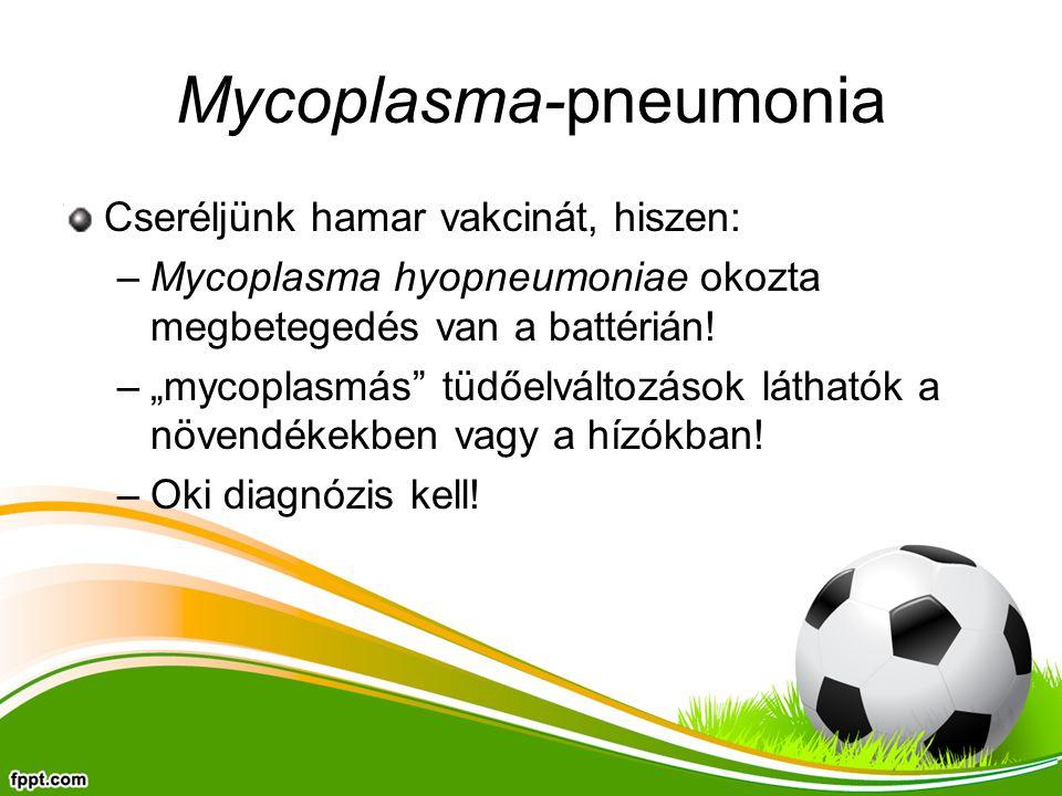 """Mycoplasma-pneumonia Cseréljünk hamar vakcinát, hiszen: –Mycoplasma hyopneumoniae okozta megbetegedés van a battérián! –""""mycoplasmás"""" tüdőelváltozások"""