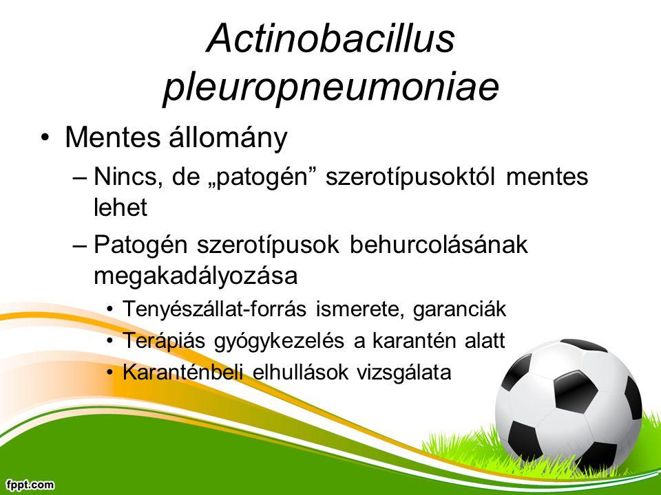 """Actinobacillus pleuropneumoniae Mentes állomány –Nincs, de """"patogén szerotípusoktól mentes lehet –Patogén szerotípusok behurcolásának megakadályozása Tenyészállat-forrás ismerete, garanciák Terápiás gyógykezelés a karantén alatt Karanténbeli elhullások vizsgálata"""