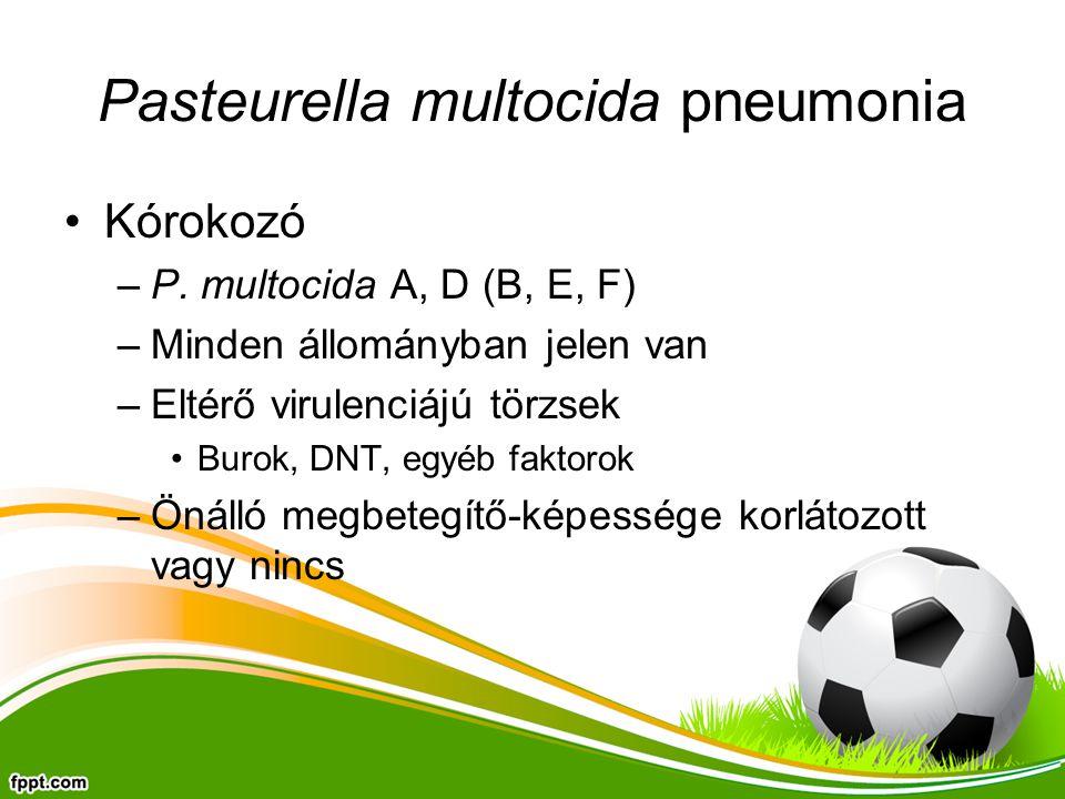 Pasteurella multocida pneumonia Kórokozó –P. multocida A, D (B, E, F) –Minden állományban jelen van –Eltérő virulenciájú törzsek Burok, DNT, egyéb fak