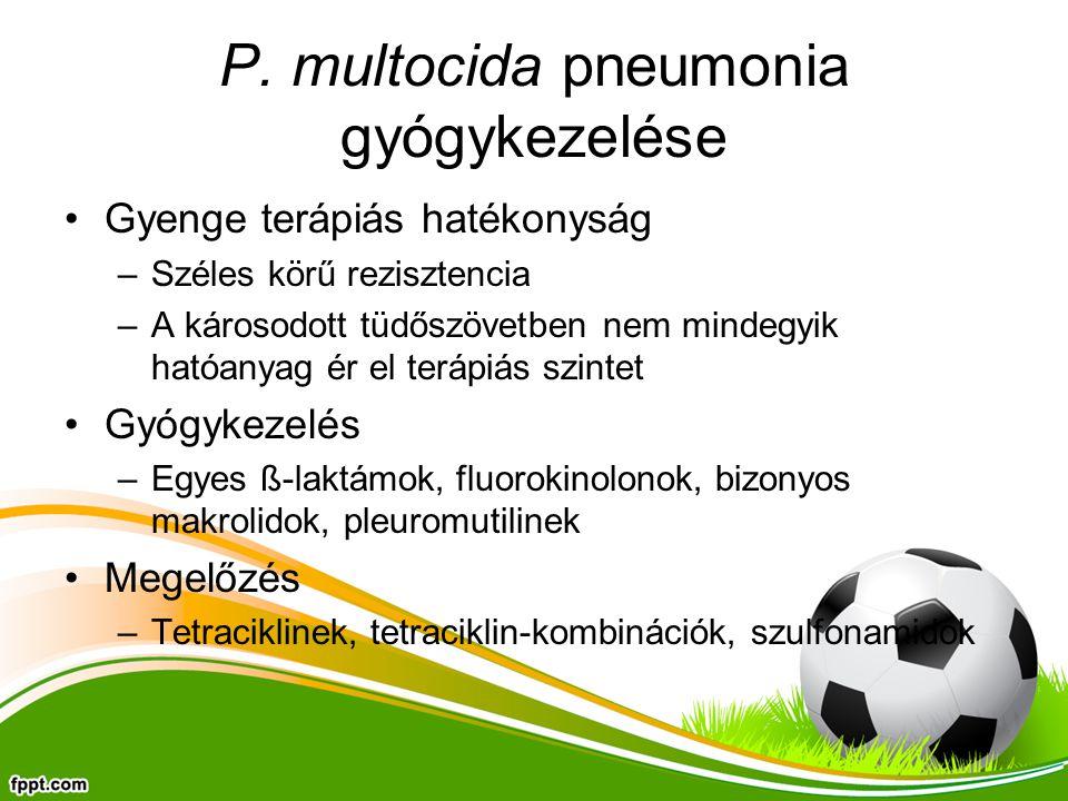 P. multocida pneumonia gyógykezelése Gyenge terápiás hatékonyság –Széles körű rezisztencia –A károsodott tüdőszövetben nem mindegyik hatóanyag ér el t