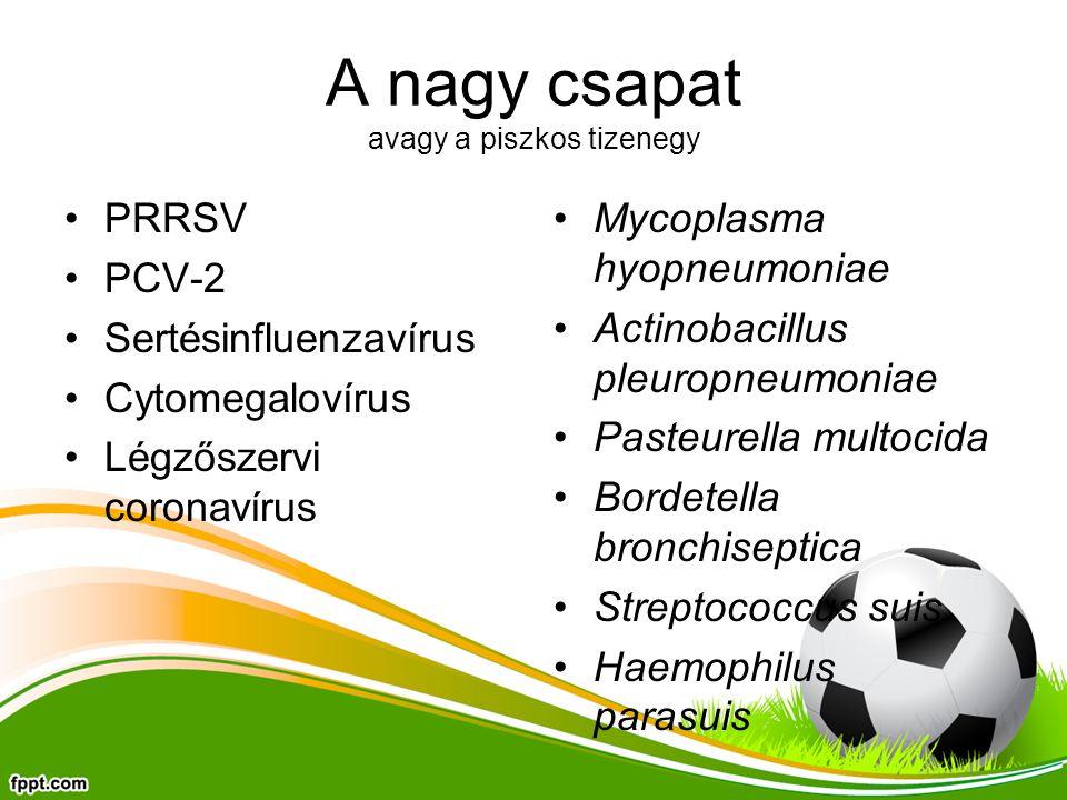 A nagy csapat avagy a piszkos tizenegy PRRSV PCV-2 Sertésinfluenzavírus Cytomegalovírus Légzőszervi coronavírus Mycoplasma hyopneumoniae Actinobacillus pleuropneumoniae Pasteurella multocida Bordetella bronchiseptica Streptococcus suis Haemophilus parasuis