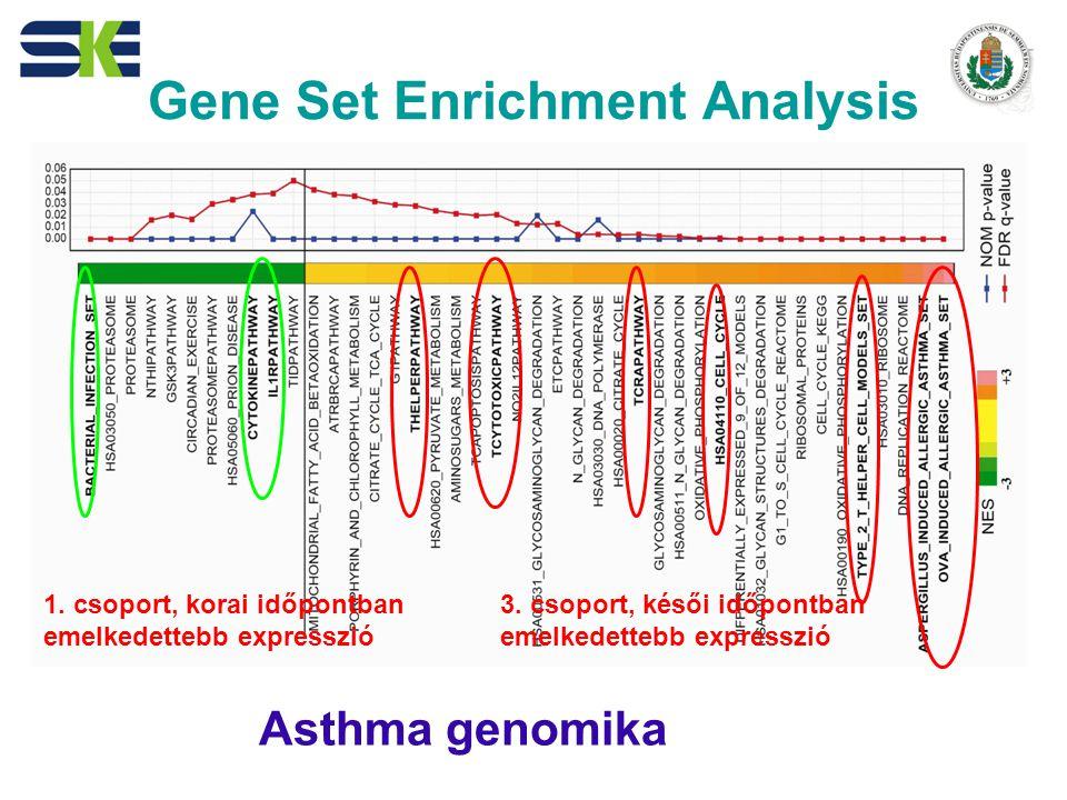 Gene Set Enrichment Analysis 1.csoport, korai időpontban emelkedettebb expresszió 3.