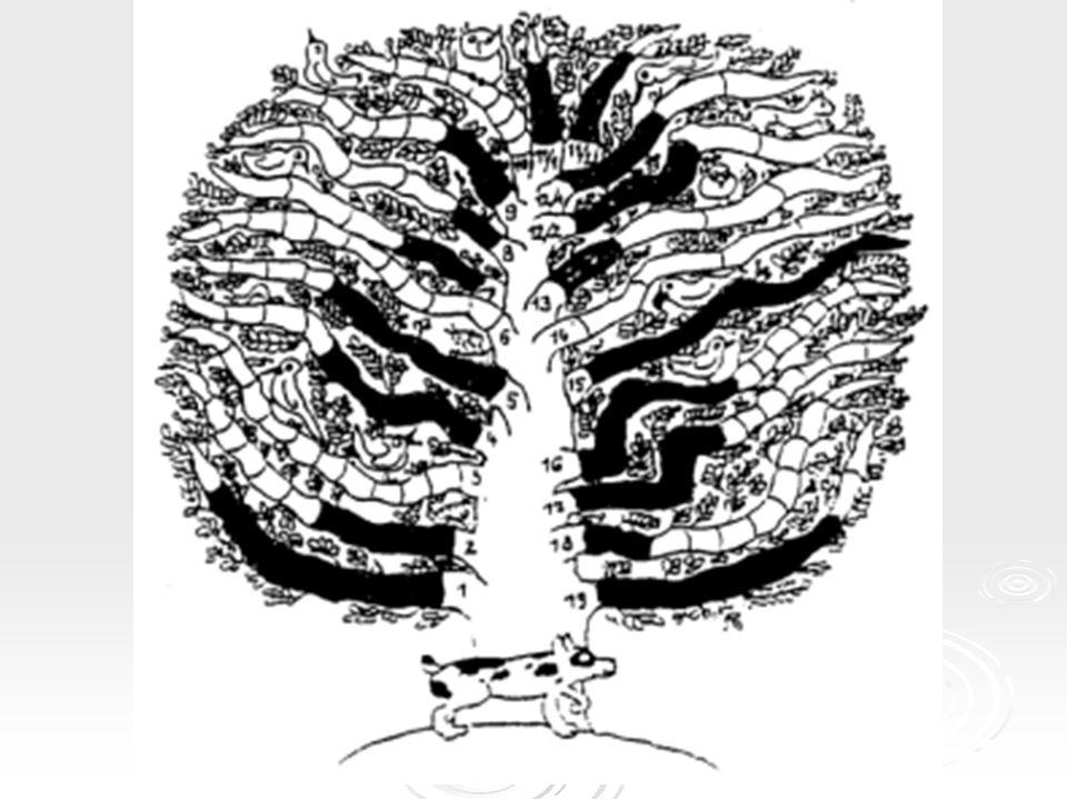 Részképességek  Vizuális figyelem  Akusztikus figyelem  Vizuális észlelés  Akusztikus észlelés  Vizuális emlékezet  Verbális-akusztikus emlékezet  Intermodális kódolás  Szeriális észlelés  Beszédmotorika  Vizuo-motoros koordináció  Téri orientáció