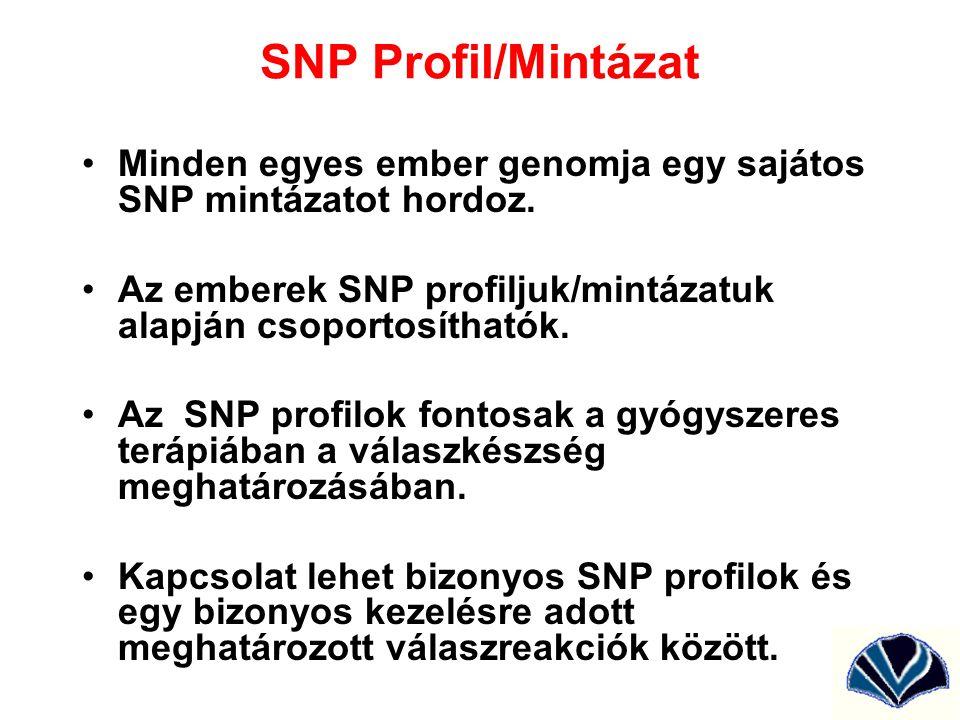 SNP Profil/Mintázat Minden egyes ember genomja egy sajátos SNP mintázatot hordoz. Az emberek SNP profiljuk/mintázatuk alapján csoportosíthatók. Az SNP