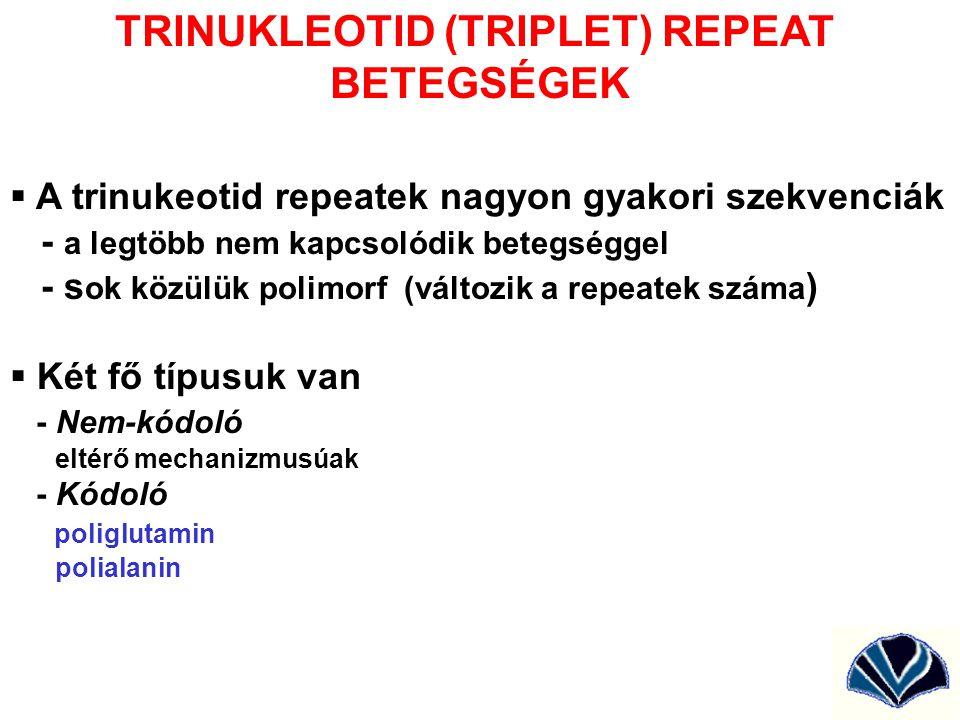 TRINUKLEOTID (TRIPLET) REPEAT BETEGSÉGEK  A trinukeotid repeatek nagyon gyakori szekvenciák - a legtöbb nem kapcsolódik betegséggel - s ok közülük po