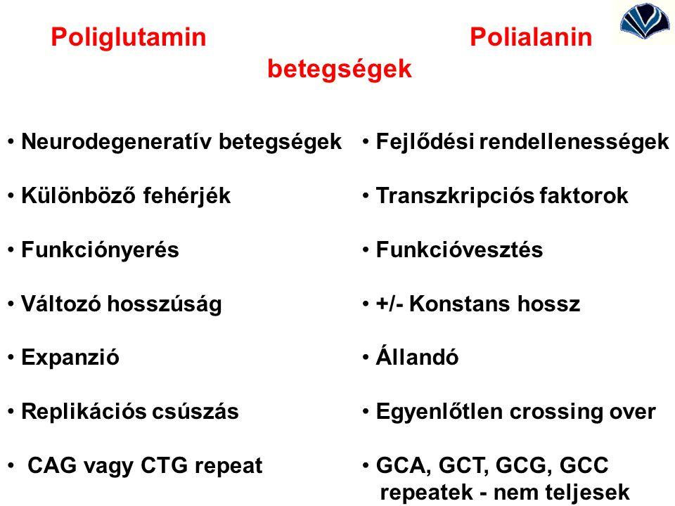 Poliglutamin Polialanin betegségek Neurodegeneratív betegségek Különböző fehérjék Funkciónyerés Változó hosszúság Expanzió Replikációs csúszás CAG vag