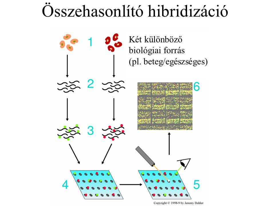 Összehasonlító hibridizáció Két különböző biológiai forrás (pl. beteg/egészséges)