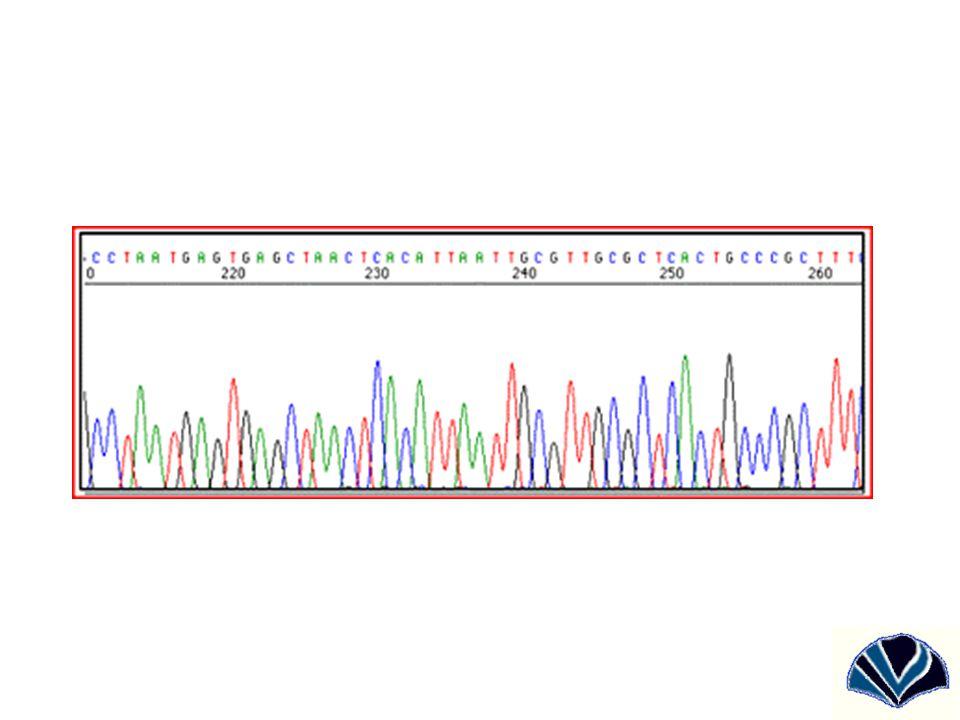 Variációs típusok Nagyméretű: –Kromoszóma számbeli –Kromoszóma átrendeződések, kromoszómaszegment duplikációk, és deléciók Közepes: –Szekvencia ismétlődések (repeatek) –Transzpozonok –Kis deléciók, szekvenciális és tandem repeatek (mikroszatelliták) Kicsi: –Single Nucleotide Polymorphisms (SNP-k) –Egyetlen bázis érintő inszerciók és deléciók (indelek)