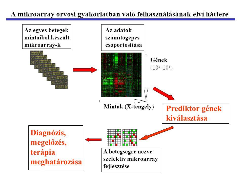 Az egyes betegek mintáiból készült mikroarray-k Az adatok számítógépes csoportosítása Minták (X-tengely) Gének (10 2 -10 3 ) Diagnózis, megelőzés, ter