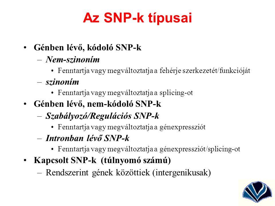 Az SNP-k típusai Génben lévő, kódoló SNP-k –Nem-szinoním Fenntartja vagy megváltoztatja a fehérje szerkezetét/funkcióját –szinoním Fenntartja vagy meg