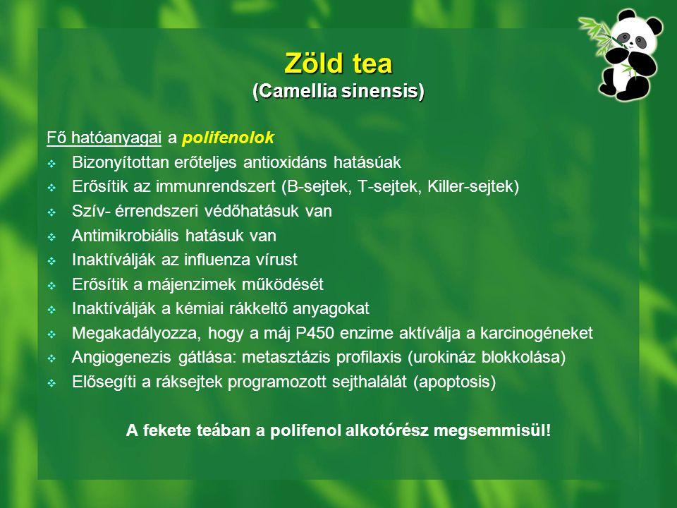 Zöld tea (Camellia sinensis) Fő hatóanyagai a polifenolok  Bizonyítottan erőteljes antioxidáns hatásúak  Erősítik az immunrendszert (B-sejtek, T-sejtek, Killer-sejtek)  Szív- érrendszeri védőhatásuk van  Antimikrobiális hatásuk van  Inaktíválják az influenza vírust  Erősítik a májenzimek működését  Inaktíválják a kémiai rákkeltő anyagokat  Megakadályozza, hogy a máj P450 enzime aktíválja a karcinogéneket  Angiogenezis gátlása: metasztázis profilaxis (urokináz blokkolása)  Elősegíti a ráksejtek programozott sejthalálát (apoptosis) A fekete teában a polifenol alkotórész megsemmisül!