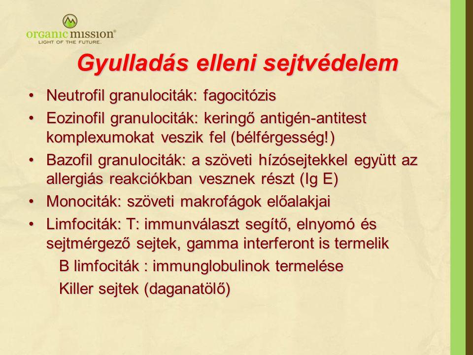 Gyulladás elleni sejtvédelem Neutrofil granulociták: fagocitózisNeutrofil granulociták: fagocitózis Eozinofil granulociták: keringő antigén-antitest komplexumokat veszik fel (bélférgesség!)Eozinofil granulociták: keringő antigén-antitest komplexumokat veszik fel (bélférgesség!) Bazofil granulociták: a szöveti hízósejtekkel együtt az allergiás reakciókban vesznek részt (Ig E)Bazofil granulociták: a szöveti hízósejtekkel együtt az allergiás reakciókban vesznek részt (Ig E) Monociták: szöveti makrofágok előalakjaiMonociták: szöveti makrofágok előalakjai Limfociták: T: immunválaszt segítő, elnyomó és sejtmérgező sejtek, gamma interferont is termelikLimfociták: T: immunválaszt segítő, elnyomó és sejtmérgező sejtek, gamma interferont is termelik B limfociták : immunglobulinok termelése B limfociták : immunglobulinok termelése Killer sejtek (daganatölő) Killer sejtek (daganatölő)