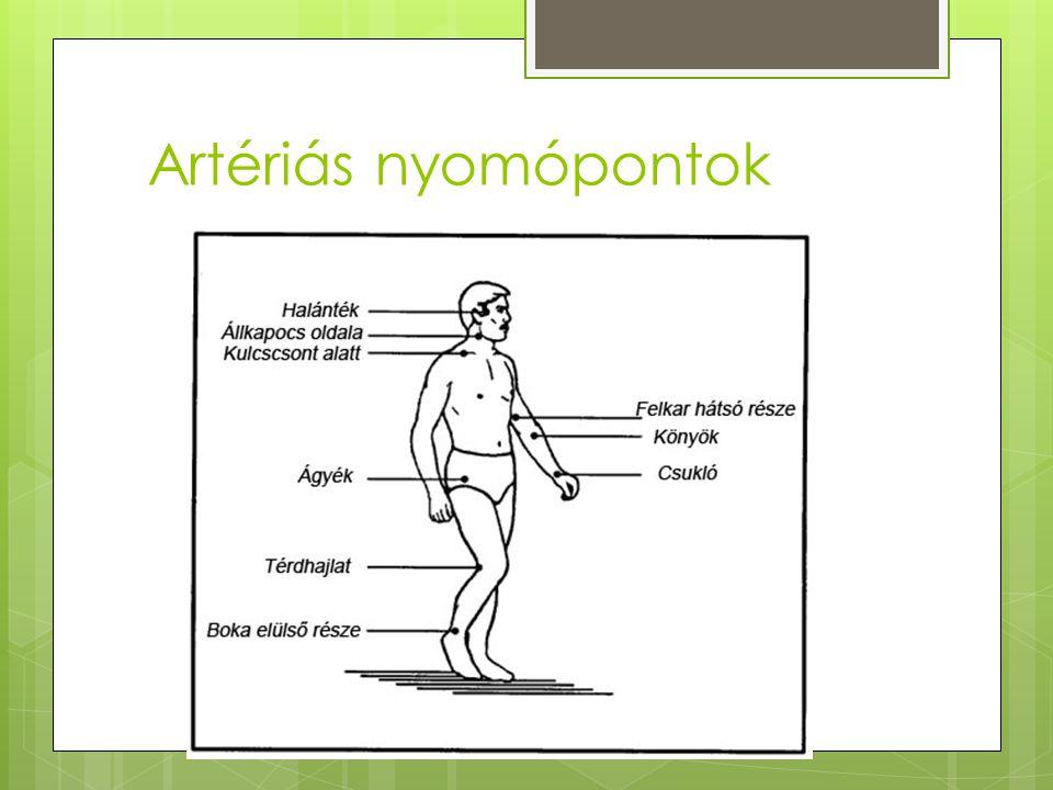 Artériás nyomópontok