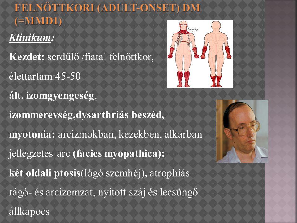 Klinikum: Kezdet: serdülő /fiatal felnőttkor, élettartam:45-50 ált. izomgyengeség, izommerevség,dysarthriás beszéd, myotonia: arcizmokban, kezekben, a