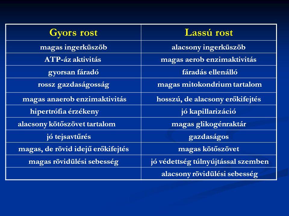 Gyors rostLassú rost magas ingerküszöbalacsony ingerküszöb ATP-áz aktivitásmagas aerob enzimaktivitás gyorsan fáradó fáradás ellenálló rossz gazdaságo