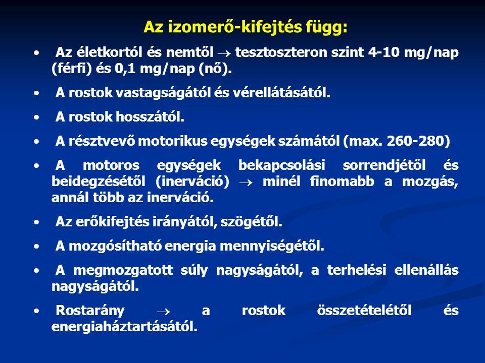 Az izomerő-kifejtés függ: Az életkortól és nemtől  tesztoszteron szint 4-10 mg/nap (férfi) és 0,1 mg/nap (nő). A rostok vastagságától és vérellátását