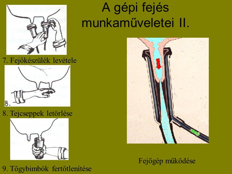 A gépi fejés munkaműveletei II. 7. Fejőkészülék levétele 8. Tejcseppek letörlése 9. Tőgybimbók fertőtlenítése Fejőgép működése