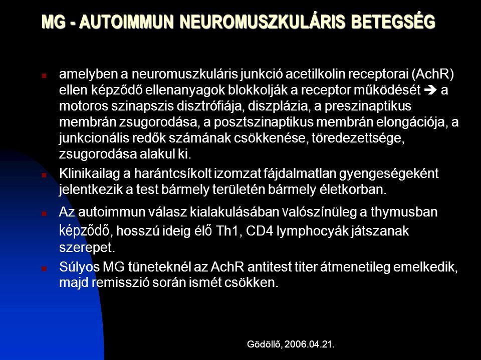 Gödöllő, 2006.04.21. MG - AUTOIMMUN NEUROMUSZKULÁRIS BETEGSÉG amelyben a neuromuszkuláris junkció acetilkolin receptorai (AchR) ellen képződő ellenany