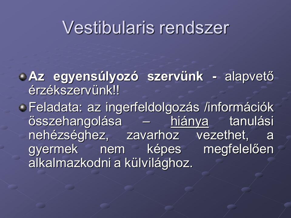 Vestibularis rendszer Az egyensúlyozó szervünk - alapvető érzékszervünk!! Feladata: az ingerfeldolgozás /információk összehangolása – hiánya tanulási