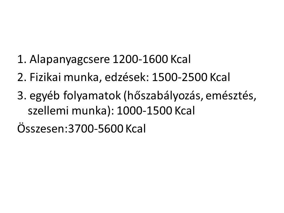 1. Alapanyagcsere 1200-1600 Kcal 2. Fizikai munka, edzések: 1500-2500 Kcal 3. egyéb folyamatok (hőszabályozás, emésztés, szellemi munka): 1000-1500 Kc