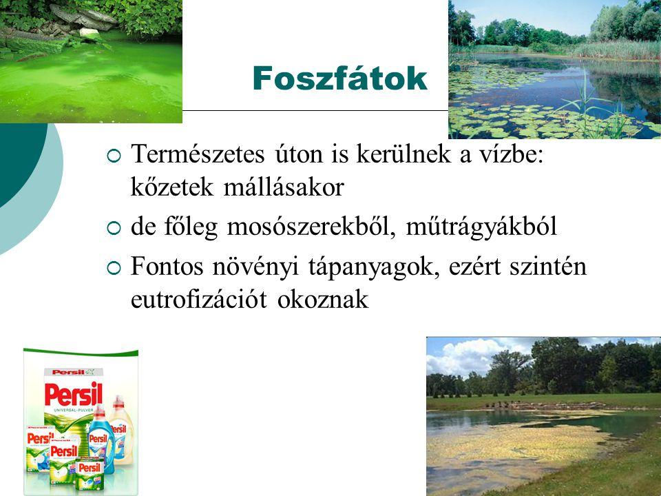 Foszfátok  Természetes úton is kerülnek a vízbe: kőzetek mállásakor  de főleg mosószerekből, műtrágyákból  Fontos növényi tápanyagok, ezért szintén eutrofizációt okoznak