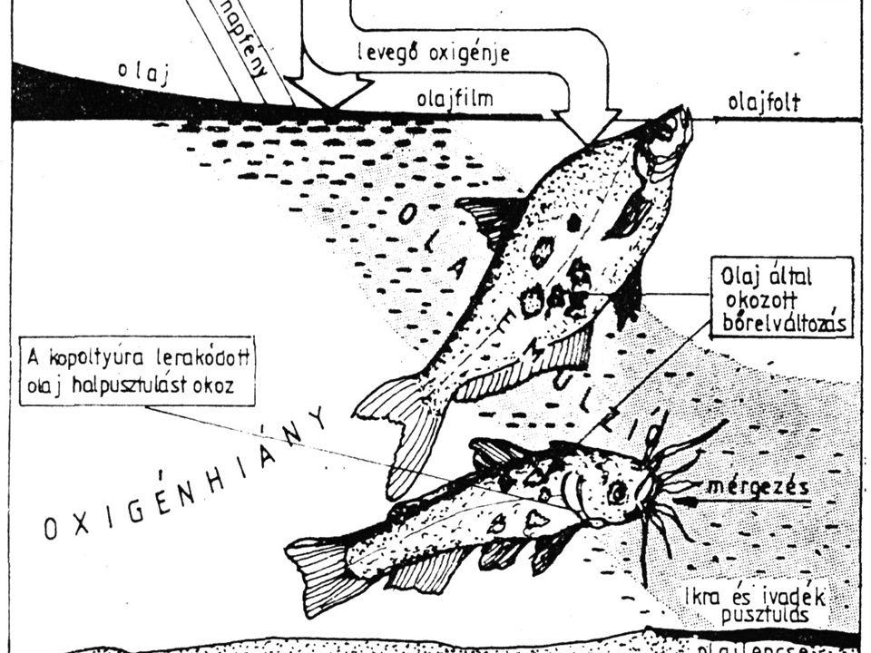 Olajszennyezés  Főleg a tengereket és az óceánokat érinti  Egy része elpárolog, a többi úszik a víz felszínén, nagyon lassan képes biológiai úton le
