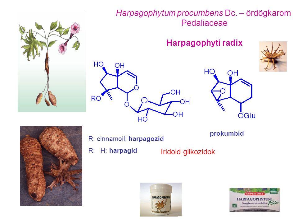 Harpagophytum procumbens Dc. – ördögkarom Pedaliaceae Harpagophyti radix R: cinnamoil; harpagozid R: H; harpagid prokumbid Iridoid glikozidok