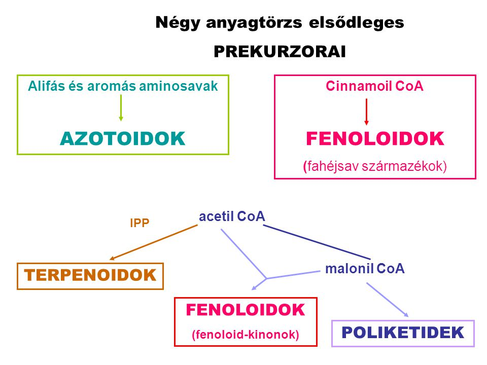 Négy anyagtörzs elsődleges PREKURZORAI Alifás és aromás aminosavak AZOTOIDOK Cinnamoil CoA FENOLOIDOK (fahéjsav származékok) acetil CoA TERPENOIDOK IP